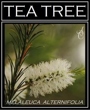 Tea Tree Essential Oil ~ Certified Organic