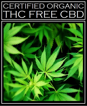 CBD Oil 420gm ~ Certified Organic Broad Spectrum THC Free Cannabidiol